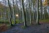 Nationalpark Jasmund (Matthias Hertwig) Tags: matthias hertwig nationalpark jasmund rügen mecklenburg vorpommern deutschland wald baum natur landschaft herbst sony a6000