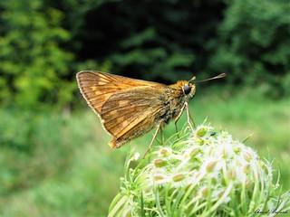 Butterfly 1535