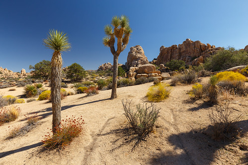 Joshua Tree - Hidden Valley