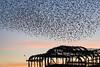 The best free entertainment in town (Explored) (hehaden) Tags: pier westpier ruin birds starlings sturnusvulgaris flying murmuration sky sunset winter brighton sussex
