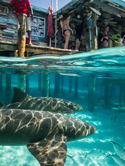 (Fifinator) Tags: split shot over under underwater photography nurse sharks bahamas portrait exuma