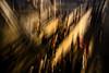 Lumières de noël à Marseille/ christmas lights in Marseille (JM DE MASSILIA) Tags: marseille light christmas noel provence nikon j2mcphotographie reflection