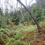 La Gomera (Spain's Canary Islands) - Parque Nacional de Garajonay: Laurel rain forest thumbnail