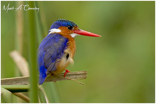 The Stunning Kingfisher!