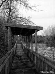 ... (Jean S..) Tags: bw blackandwhite monochrome river water path trees november