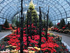 Christmas Conservatory (Cher12861 (Cheryl Kelly on ipernity)) Tags: garfieldparkconservatory chicagoillinois winterflowershow fireandice christmasdisplay poinsettias