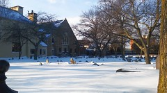 Snow 2018-01-05_090650 (bix02138) Tags: firstparishincambridgeunitarianuniversalist churches oldburyinggroundcambridgema harvardsquare cambridgema snow 2018 january5 landscapes winter ice