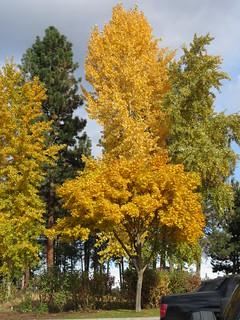 Remember Autumn?