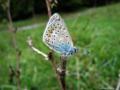 Butterfly 1540 (+1000000 views!) Tags: butterfly borboleta farfalla mariposa papillon schmetterling فراشة