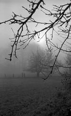 Caught in the mist (Rosenthal Photography) Tags: dezember nebel herbst bnw schwarzweiss anderlingen 35mm natur wiese asa400 20171202 ff135 pflanzen städte bäume ilfordhp5 bw olympus35rd analog rodinal150 dörfer siedlungen landcsape blackandwhite december mood fog mist nature fields morning autumn olympus olympus35 35rd fzuiko zuiko 40mm f17 ilford hp5 hp5plus rodinal 150 20°c 11min epson v800