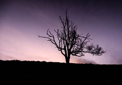 Tree on the hill (SkyBlue Photography Pro) Tags: posbank veluwe nederland rheden silhouette sunrise 6dm2 canon