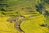 _29A0300.0917.Lao Chải.Sapa.Lào Cai (hoanglongphoto) Tags: asia asian vietnam northvietnam northwestvietnam landscape scenery vietnamlandscape vietnamscenery vietnamscene terraces terracedfields terracedfieldsinvietnam sunlight sunny morning sunnymorning treehill homes house canon tâybắc làocai sapa phongcảnh buổisáng nắng nắngsớm ruộngbậcthang ruộngbậcthangsapa nhà canonef70200mmf28lisiiusmlens canoneos5dsr harvest mùagặt lúachín sapamùagặt sapamùalúachín laochải hillside sườnđồi valley thunglũng