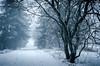 Rennsteig trail near Masserberg in Thüringer Wald (Felix Ott) Tags: rennsteig masserberg thüringerwald snow schnee baum tree tees wood wald forrest blackwhite winter