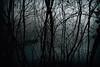 001lake (Raptorfairy) Tags: spooky forest woods smokymountains mountains dark darkforest darkblue tn canon horror night fog mist eerie lake trees dock scary
