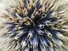 Close up (Jessica Coudert) Tags: closeup close up flower macro purple