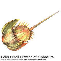 Xiphosura with Color Pencils [Time Lapse] (drawingtutorials101.com) Tags: xiphosura animals sea water sketching pencil sketch sketches draw drawing drawings color colors coloring how timelapse video speed