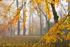 Autumn in the Woods - Dordrecht 2017 (Wilma v H- thanks 4 U'r lovely comments/faves!) Tags: autumnscenics autumn autumncolours autumn2017 autumnleaves 2017 fallscenics fall woods dordtwijkestate achterweg dubbeldam dordrecht trees nature herfst nederland netherlands bicyclepath fietspad fog foggy mist misty outdoors canoneos60d luminositymasks tkactionsv5panel