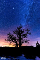 dead tree galaxy (Aaron_Smith_Wolfe_Photography) Tags: tree stars galaxy andromeda sunset dead sierra nevada