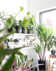 We love rainy storefront days because we turn on lamps & soft tunes and simple settle into our cozy plant-filled environment. We're open from 11-7 if you want see what we mean. (The ZEN Succulent) Tags: the zen succulent terrarium instagram