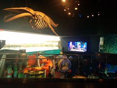 Fossil above #toronto #ripleysaquarium #aquarium #ticket #fossil #fish #latergram (randyfmcdonald) Tags: fish ripleysaquarium fossil latergram ticket aquarium toronto