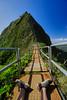 Don't give up now (8mr) Tags: stairway heaven dont give up never quit oahu honolulu waikiki hawaii mountain climbing hike hiker hiking wide angle zeiss hawaiian island adventure