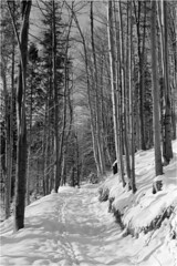 Winter path / Zimowa ścieżka (Piotr Skiba) Tags: winter snow trees forest path shadows mountains beskidy beskidśląski landscape eos kodaktmax100 bw monochrome poland pl piotrskiba