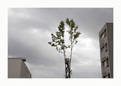 Décapitation (hélène chantemerle) Tags: arbres extérieur nuageux paysages urbain tree man outdoor city urban landscape cloudy grey