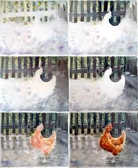 1979_1 (Мария Юрист) Tags: свет light birds roosters птицы петухи watercolor nevskayapalitra акварель стадии process 365 enterclass autumn осень