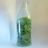 2017_12_26_GreenGlassShards (giopuo) Tags: glass pebbles green greenpebbles shards glassshards colouredglass bottle tinybottle softbox