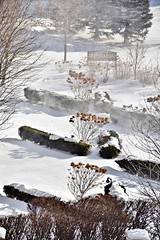 After the Storm, Toronto, ON (Snuffy) Tags: snow winter seasons northyork toronto ontario canada