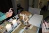 noel_241217_055 (Rémi-Ange) Tags: veillée noël réveillon décorations dîner sapin guirlandes