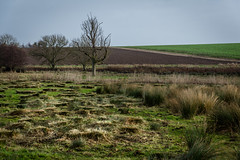 Why? (Jean Latteur) Tags: northbourne kent england countryside nikon d3300 nikkor 18105