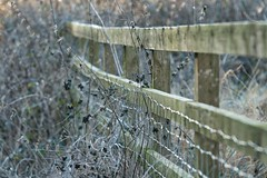 A Winter Fence (jillyspoon) Tags: hff winter fence woodenfence happyfencefriday harrogate fencefriday canon canon70d canon70200mm 70200 ef70200 barbedwire dead weeds