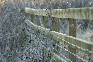 A Winter Fence