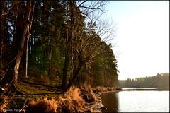 DSC_7039 (facebook.com/DorotaOstrowskaFoto) Tags: rejów skarżyskokamienna zalew zalewrejowski plaża drzewa woda świętokrzyskie poland spacer