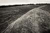 Warham camp earthworks (AJ Mitchell) Tags: ditch warham warhamfort british isles norfolk hillfort earthwork prehistoric bw highcontrast pushed iceni britishisles