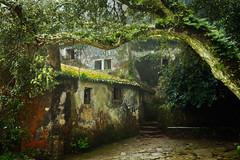 The Monastery (J C Mills Photography) Tags: sintra sintracascaisnaturalpark portugal monastery conventodoscapuchos building abandoned mist cork oak ferns moss landscape