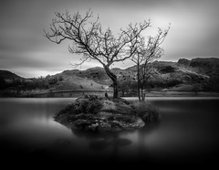 Lone Tree, Rydal Water (Mick Blakey) Tags: shoreline slowexposure tranquility calm peaceful reflection cumbria moody quiet vista peace monochrome solitary scenic black rydalwater tranquil landscape serene walkers cold silky highlights lakedistrict lonetree scenery solitude restful blackwhite relaxing shore deserted reflectitons lake silhouette contrast walk