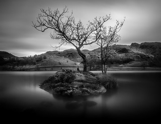 Lone Tree, Rydal Water