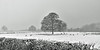 Normanton Park (AndyorDij) Tags: sheep snow snowing snowscape snowy trees tree hedgerow england empingham rutland uk rutlandwater 2017 andrewdejardin december normanton normantonpark frozen