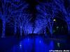 aonodokutsu010 (et_dslr_photo) Tags: xmas illumination 青の洞窟 shibuya yoyogi blueled night nightview nightshot hdr