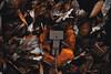 Danbo 2 @autumn2017 (Robert Krstevski) Tags: robertkrstevski danbo danboard danbomacedonia danbostory danborou danboamazon 365danbo autumn fall fall2017 autumn2017 macedonia krivapalanka balkan europe leaves yellow photooftheday photography photograph revoltech robertkrstevskiblogspotcom robert robot