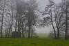 Brouillard (Meinrad Périsset) Tags: brouillard fog paysage hiver froid districtdelaglâne cantondefribourg switzerland suisse schweiz swizzera nikond850 d850 afsnikkor70200f4vr captureone11pro