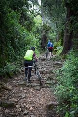 CASTAÑO DEL ROBLEDO (ALBERTO BOUZÓN TIRADO) Tags: castaño robledo sierra senderos huelva castañodelrobledo andalucía españa es