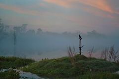 Misty Morning Sunrise (River-Life) Tags: riverlife florida nikon d5300 outdoors outdoor circlebbarreserve nature