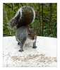 Happy new year (éric) Tags: ufraw 70210mm4 canon fd squirrel ardilla imagedatadmcg1130f10160 uploadscript imagemagick imopts photo:id=homeucecesftmp20180101p1090587ppm jardín crawley sussex