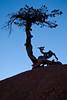 20171227-371 (cloesner) Tags: bristleconepine brycecanyon tree redrock utah sky silhouette