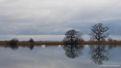 Water's edge in Nivå (mistermacrophotos) Tags: calm day glassy water sea lake trees january winter grey gray clouds dramatic still denmark dan mark øresund danmark