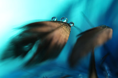 Obscurity (Macro-photography) Tags: macro canon 6d 100mm artistic colors water drops fantasy nature closeup reflection droplet light blue lightblue surreal feather macroartistic shadow macrophotography