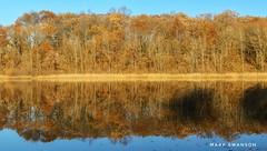 Reflection (mswan777) Tags: 1855mm nikkor d5100 nikon nature outdoor reflection sky forest tree fall autumn scenic michigan kalamazoo asylum lake quiet still water